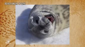 南極の動物