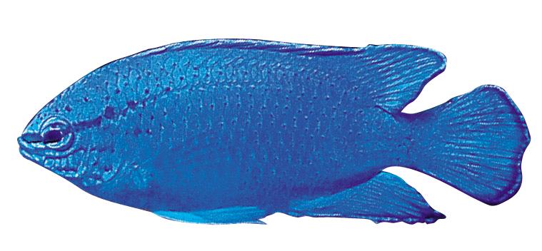 タマン RBCリアル水族館