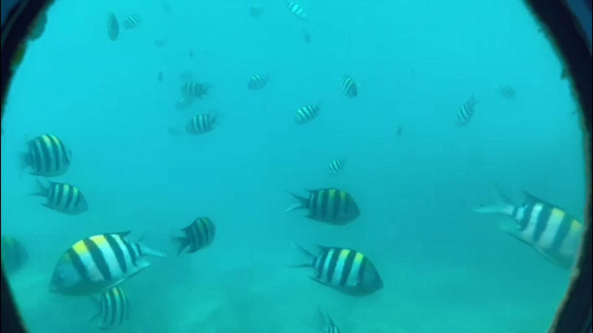 リアル水族館イメージ