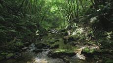 JAL/JTA presents 琉球列島 生命のシンフォニー
