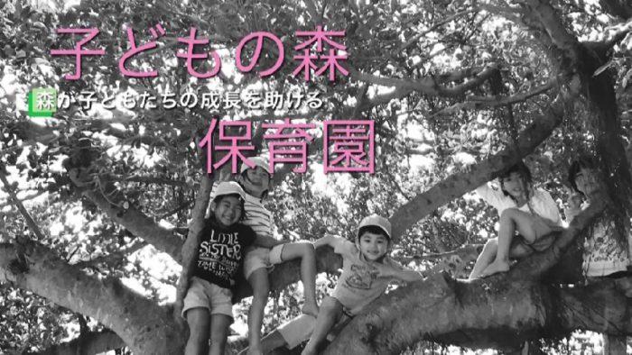 子どもの森保育園