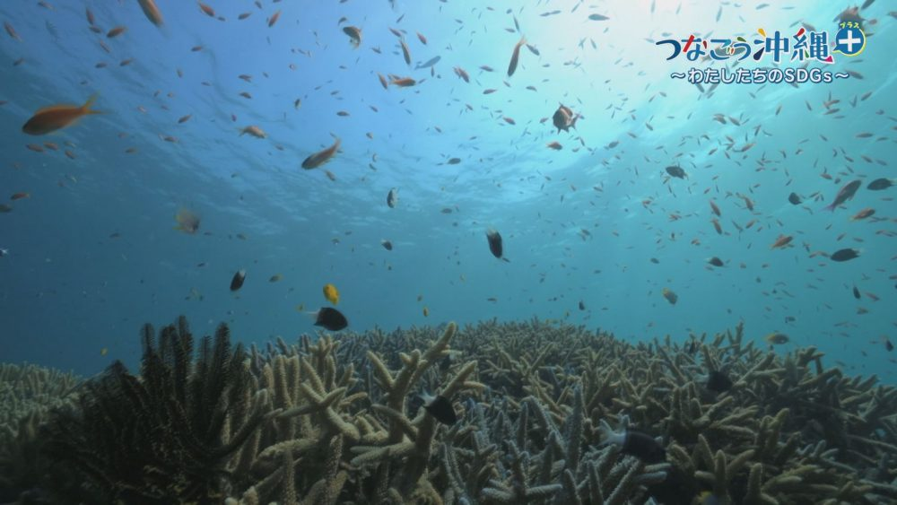 つなごう沖縄+ 豊かな自然を守るために